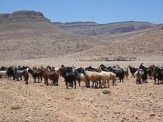 羊の放牧風景